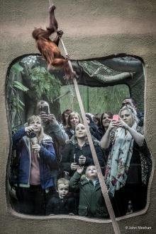 Zoo stories, 2015. Copyright John Meehan.